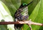 colibr_calzoncitos