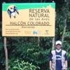 Falco_deiroleucus_Reserva_ProAves