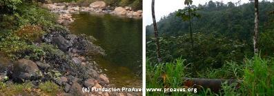 Copia_de_Presentacion1