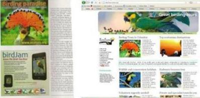 collage_birding