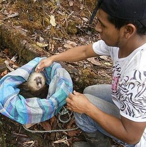 sloth_realease_el_pangan