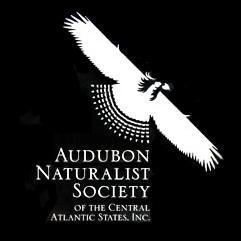 borrador logo Audubon