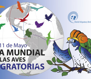 migratorias horizontal2