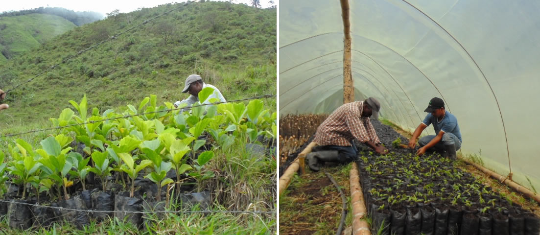 reforestacion_collage