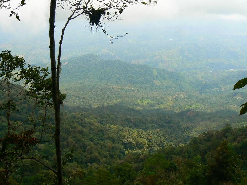 panoramica pauxi_SINAP
