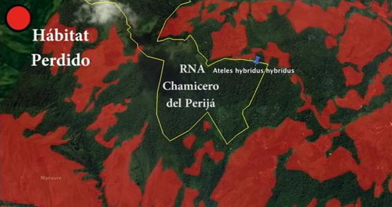 Mapa que representa satelitalmente el hábitat perdido en la zona, alrededor de la RNA Chamicero del Perijá (en color rojo). © Fundación ProAves -www.proaves.org