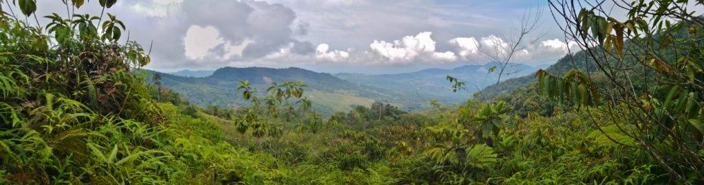 sucesion-vegetal-antes-tierras-usadas-como-potreros-hoy-en-dia-con-bosques-secundarios-que-hacen-parte-de-l