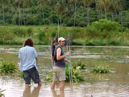 Instalando las redes de niebla en Dhorva Pond, San Luis, para la captura de aves acuáticas.
