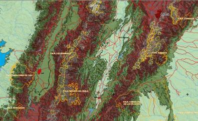 Algunos  bosques de Polylepis en Colombia