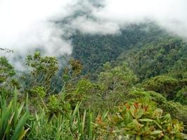 Cerulean Warbler Bird Reserve, in Santander, Colombia.