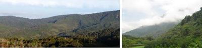 Panorámica de la finca La Antioqueña y de la Reserva Natural Loro Orejiamarillo
